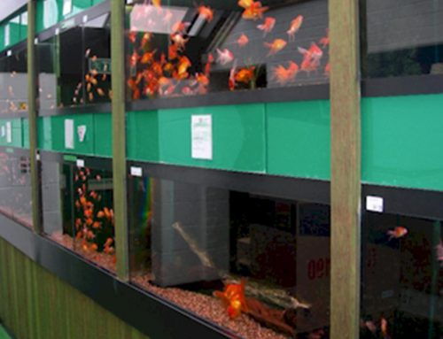 6 Good Reasons to Buy Fish from a shop